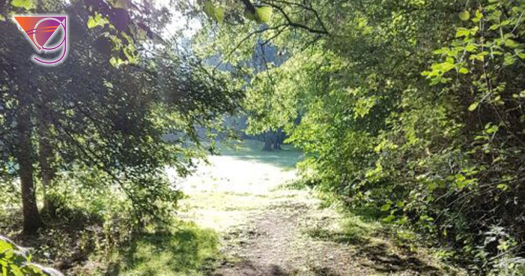 Why I Walk in Nature